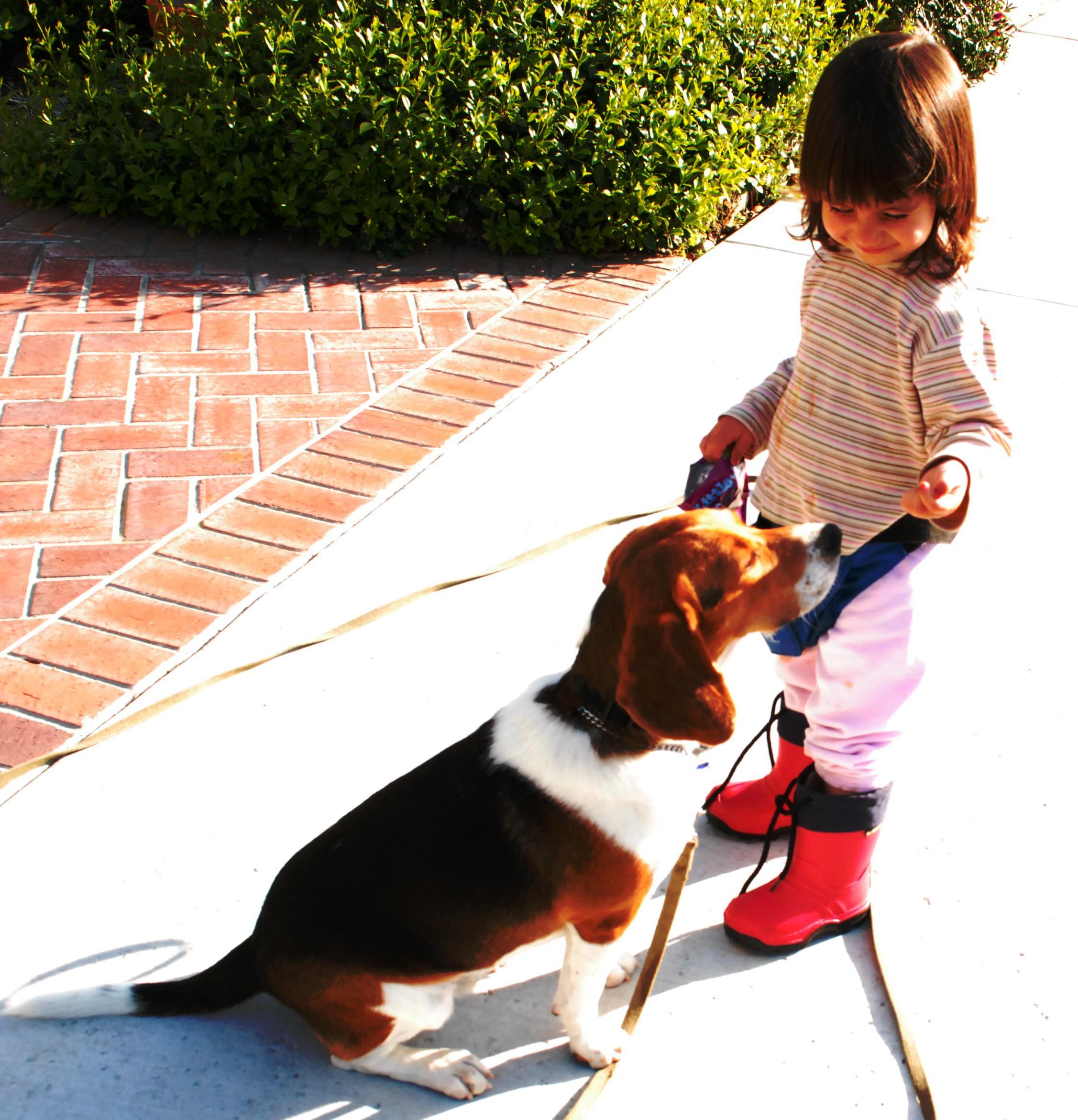 Kiwi Dog Trainer